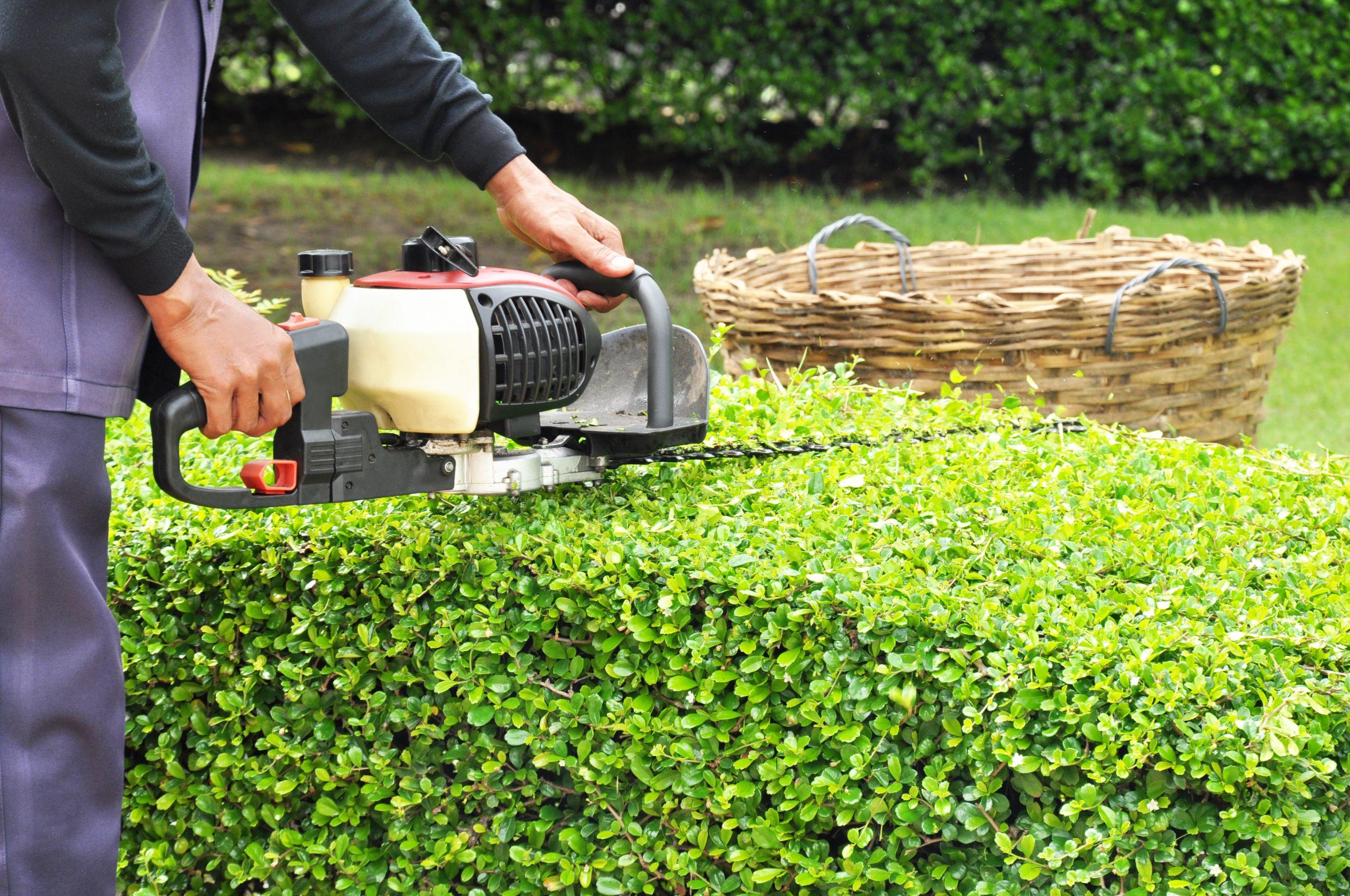 shrub and hedge trimming dartmouth ma