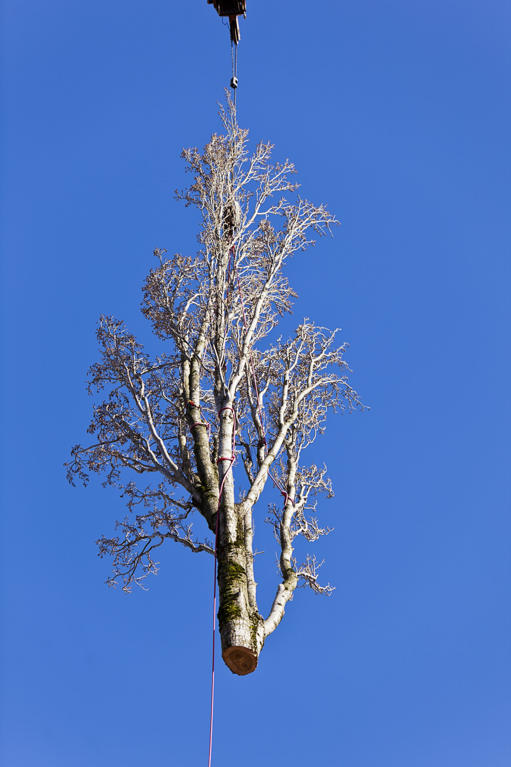 tree removal service dartmouth ma