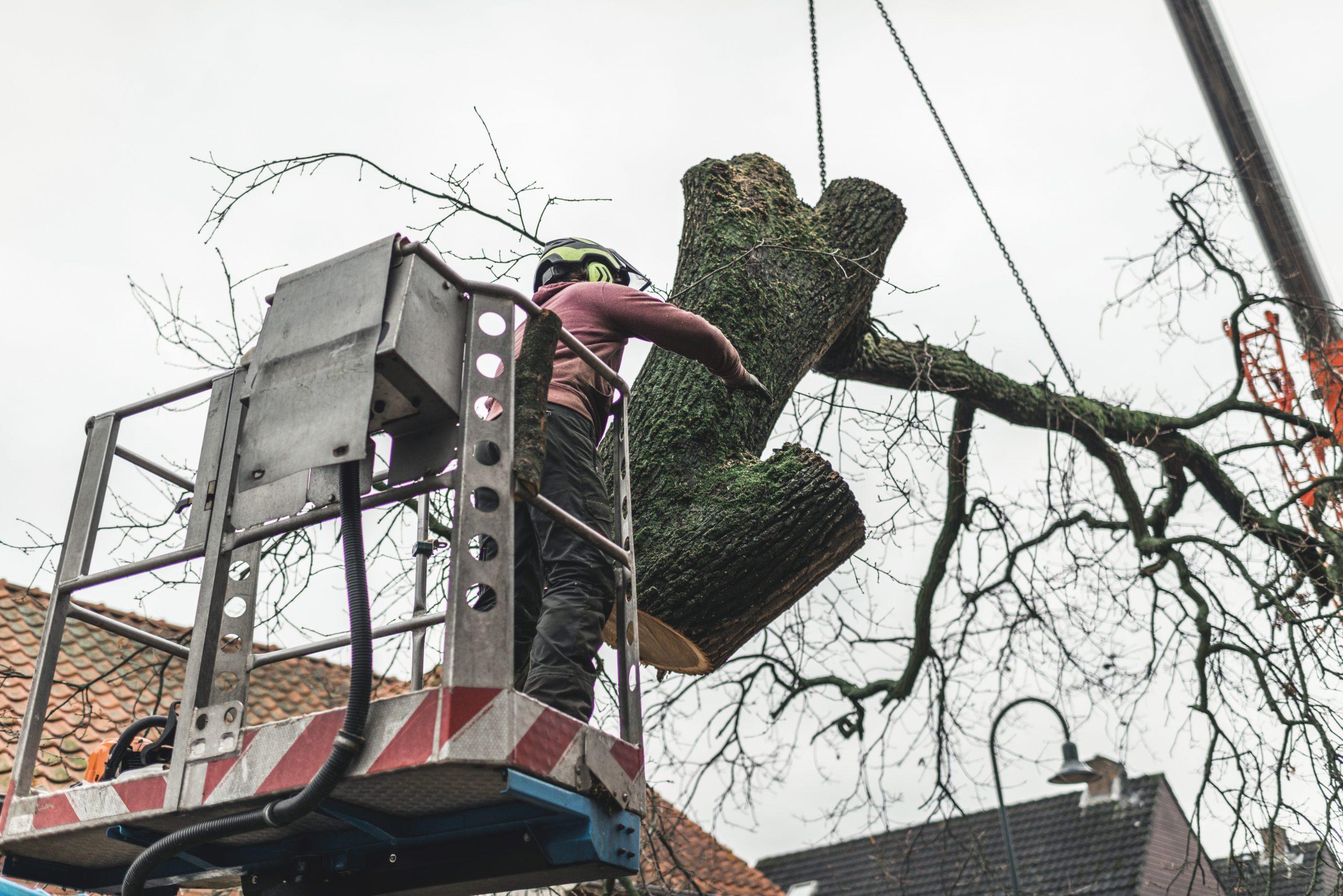 tree services dartmouth ma