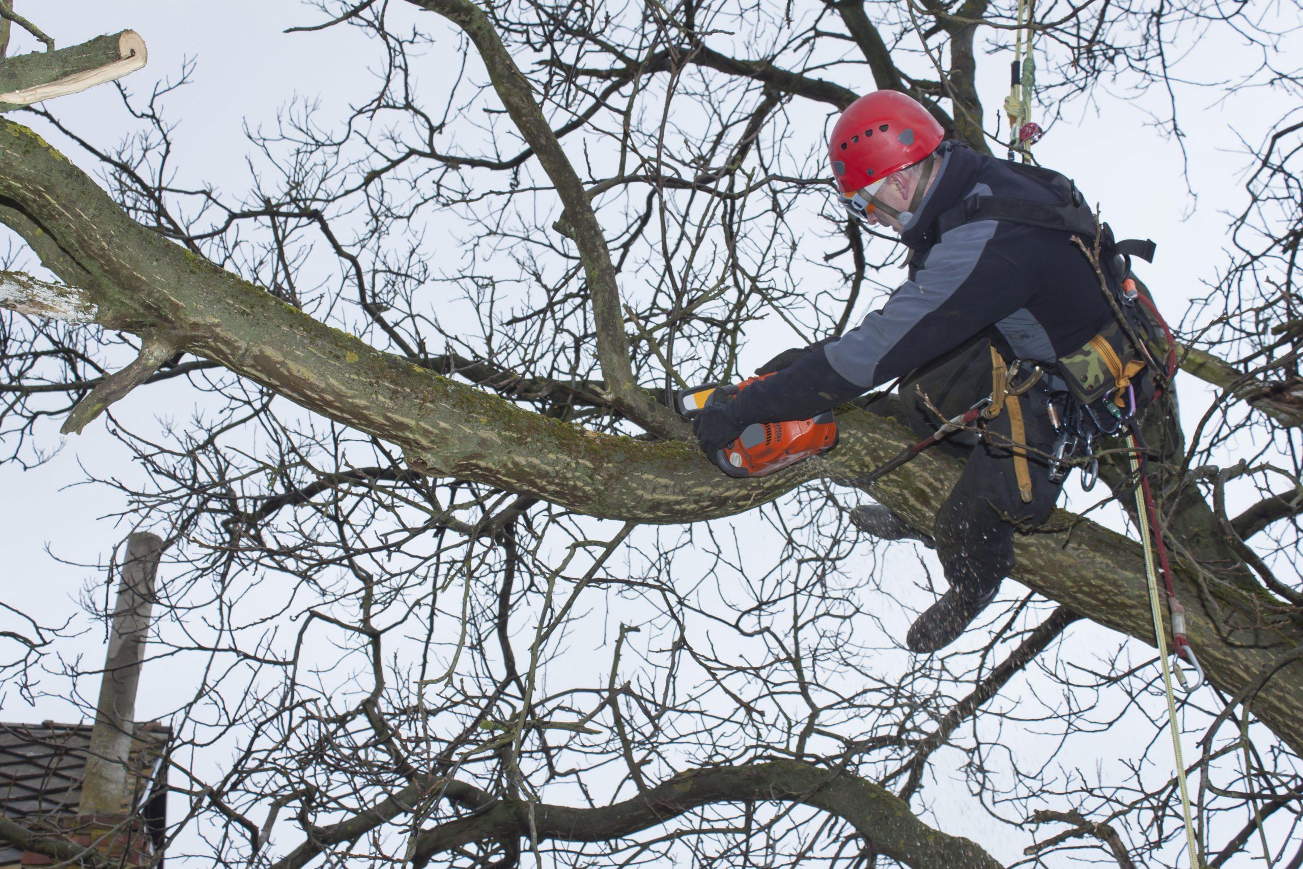 tree specialists dartmouth ma